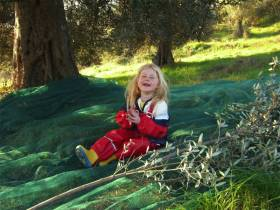 Olive Harvest, also great fun with children