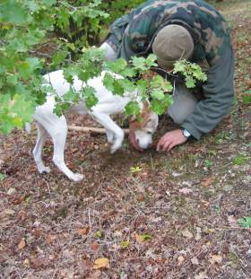 Truffle hunting in Umbria