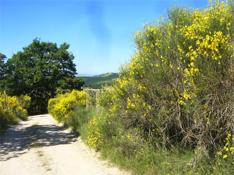 Gravel road leading to La Rogaia